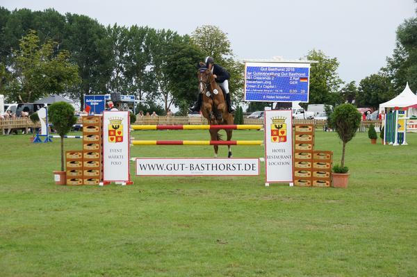pferd sport live tv