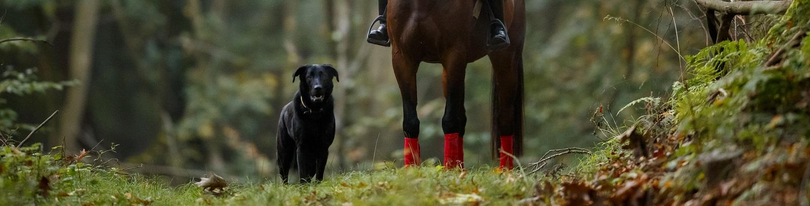 Pferd+Sport: Zucht und Sport in Schleswig Holstein und